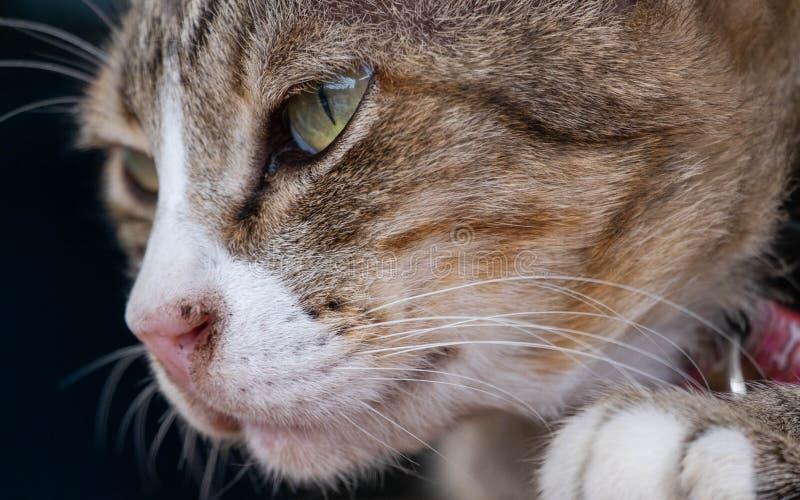 Katter är gulliga husdjur och gillar att vara nästan ägaren Men kattens djupa vana är dålig royaltyfri fotografi