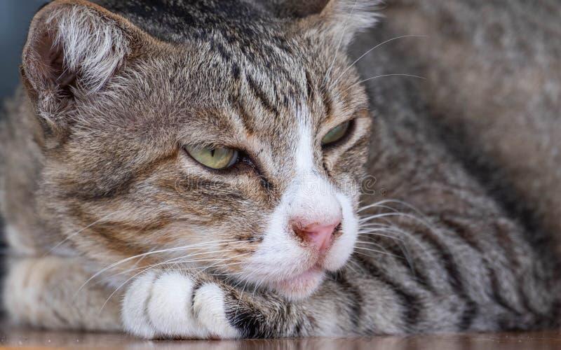 Katter är gulliga husdjur och gillar att vara nästan ägaren Men kattens djupa vana är dålig arkivfoton