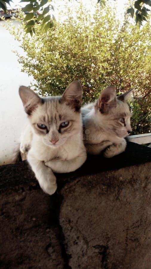 Katter arkivfoto