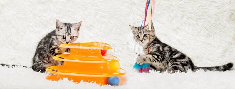 Katter royaltyfria foton