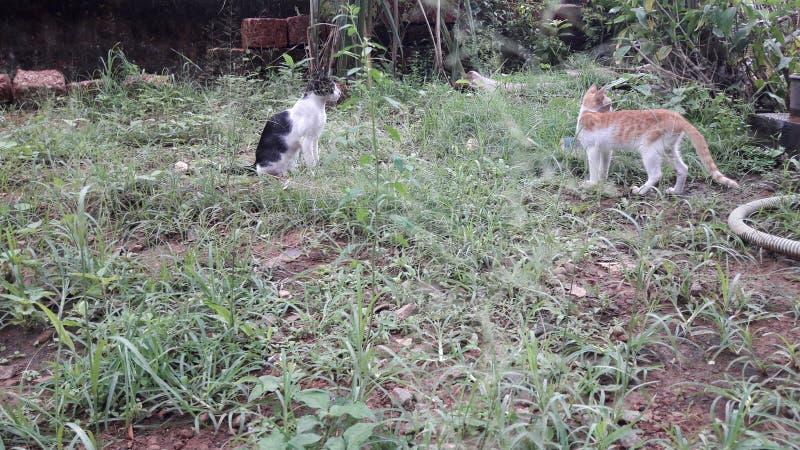 Katter royaltyfri foto