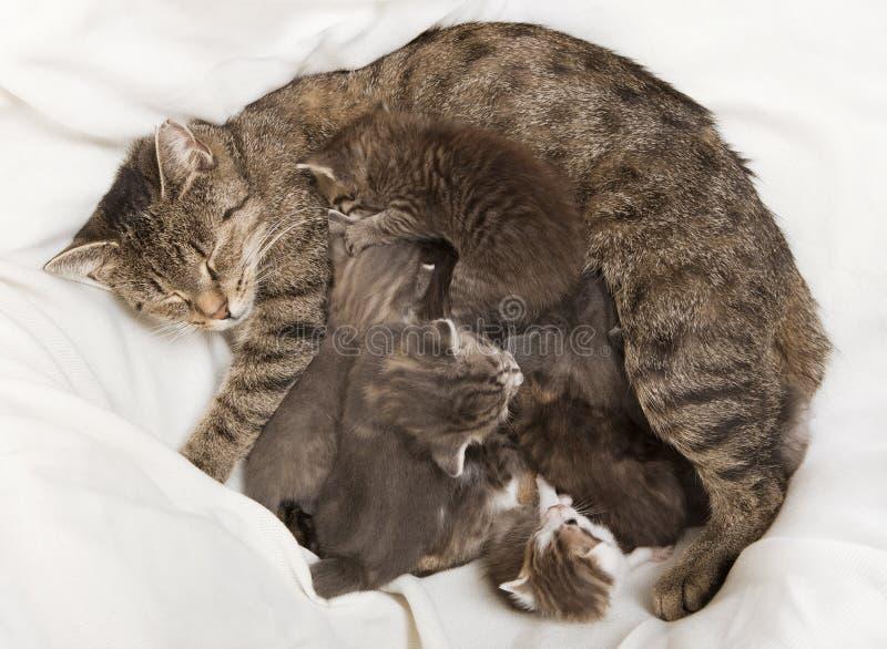 Katter behandla som ett barn drinken på hennes moder arkivbild