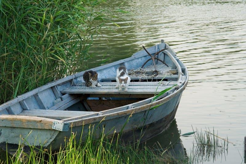 Katter i en fiskebåt arkivbilder