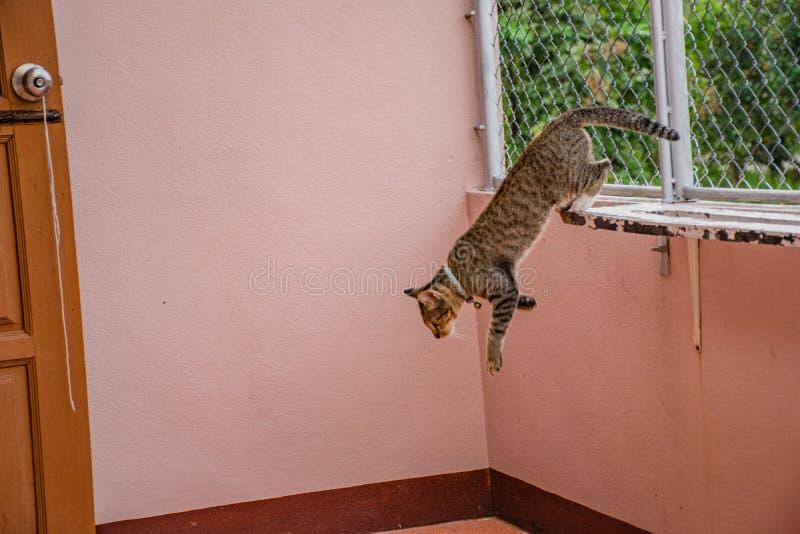 Katter i gester royaltyfri foto