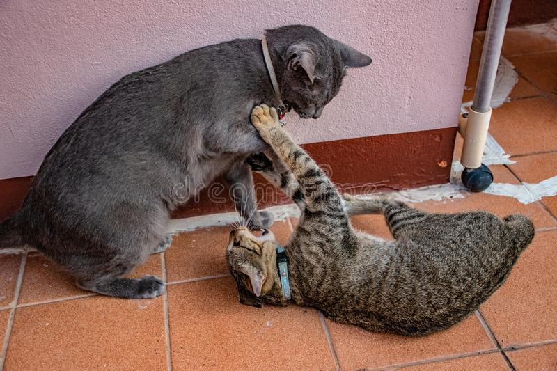 Katter i gester royaltyfria foton