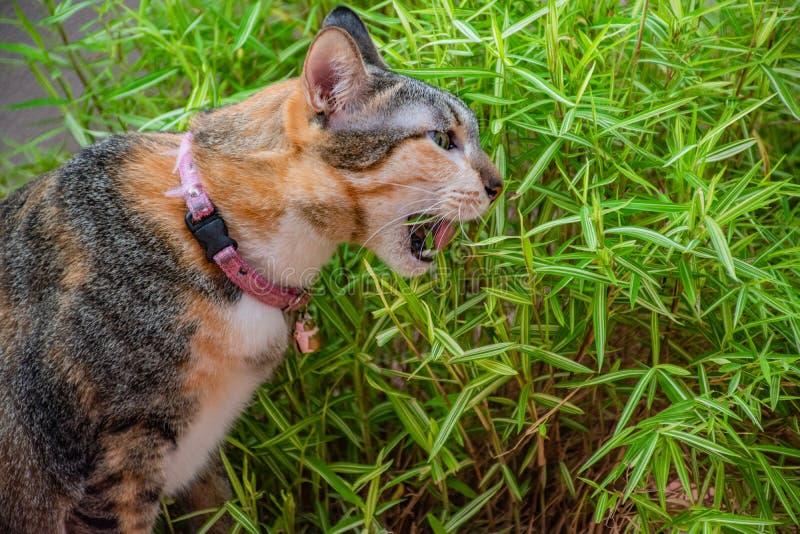 Katter i gester royaltyfria bilder