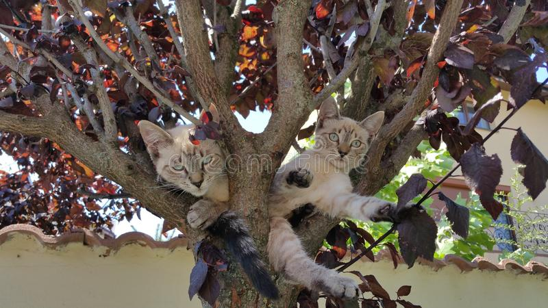Katter i träd royaltyfri bild