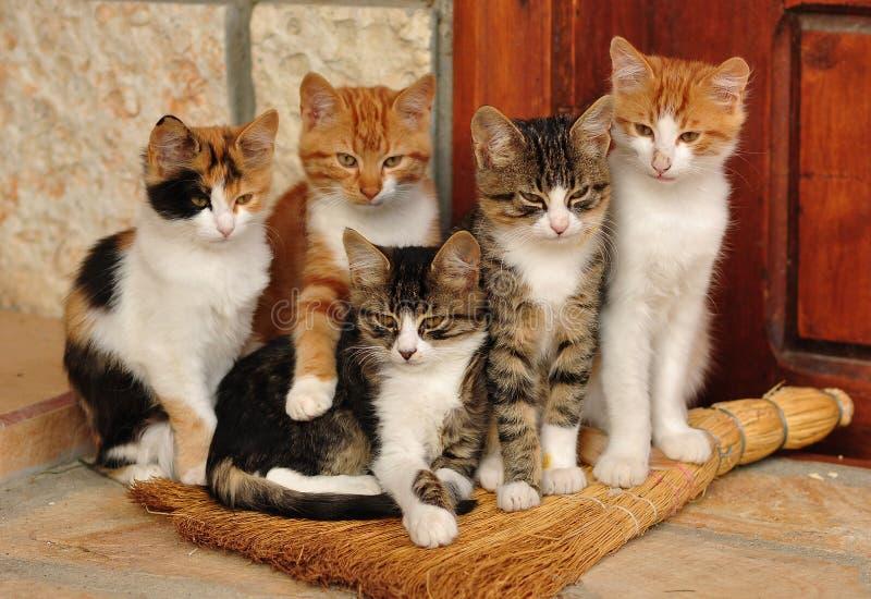 katter little arkivfoton