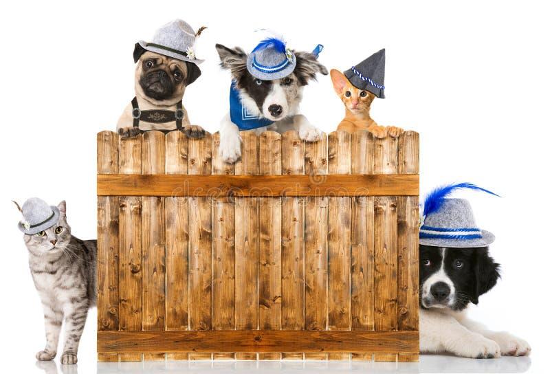 Katter och hundkapplöpning arkivfoto