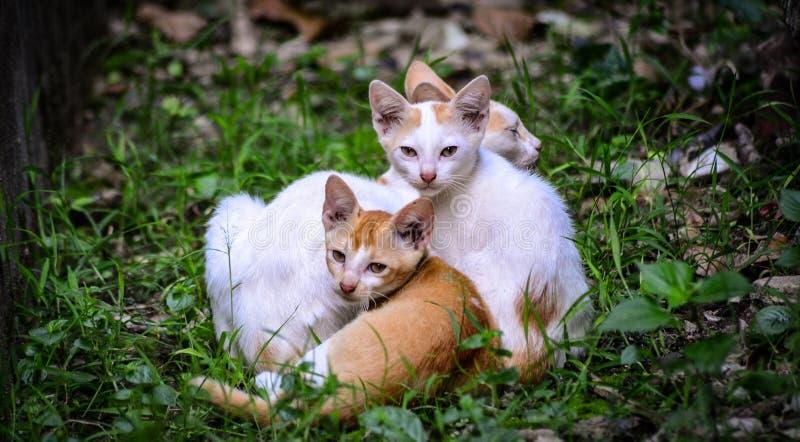Katter och kattungar arkivbild