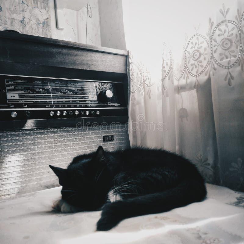 Katter och lägenheter royaltyfria bilder