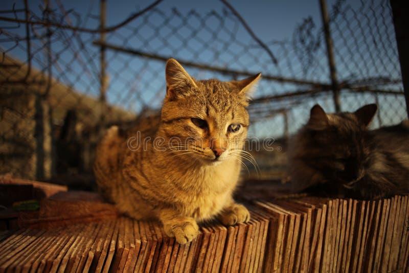 Katter och solnedgång fotografering för bildbyråer