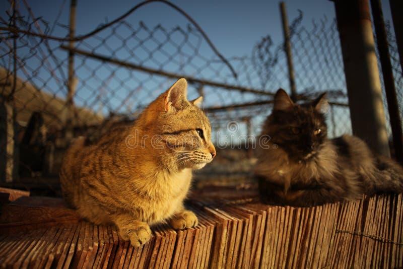 Katter och solnedgång arkivbild