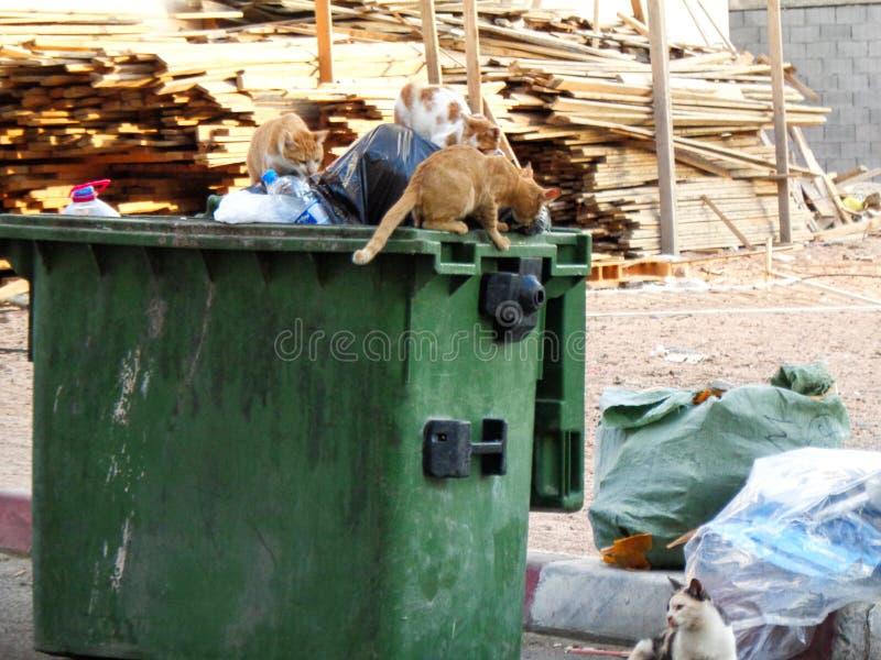 katter söker för mat i en förlorad korg arkivbilder