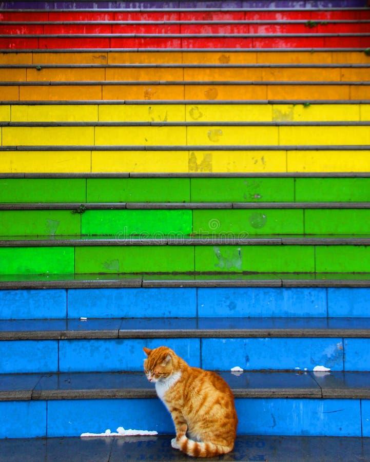 Katter sitter framme av färgrik målad trappa arkivbilder