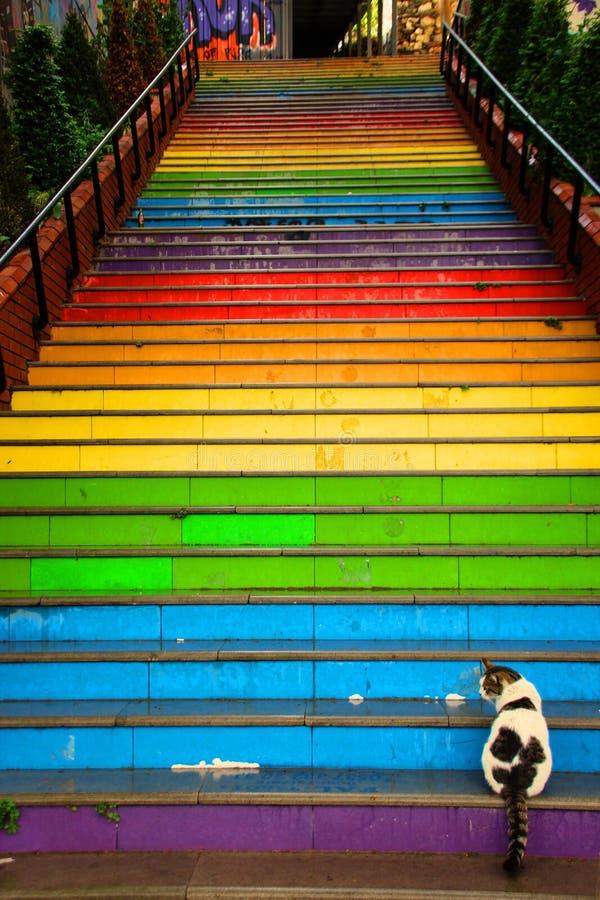 Katter sitter framme av färgrik målad trappa royaltyfri foto