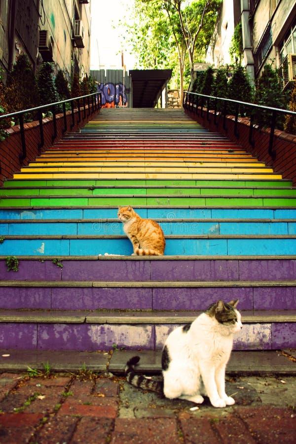 Katter sitter framme av färgrik målad trappa arkivfoton