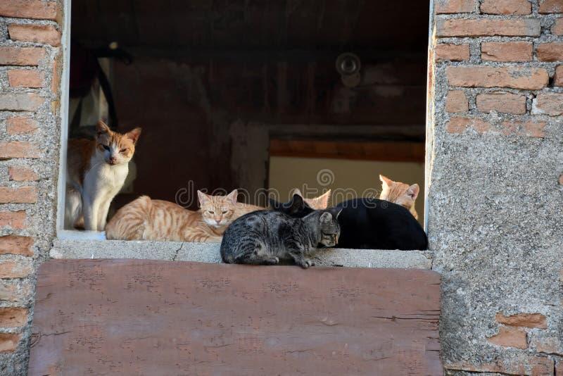 Katter som bor i spökeby av Pentedattilo royaltyfria foton