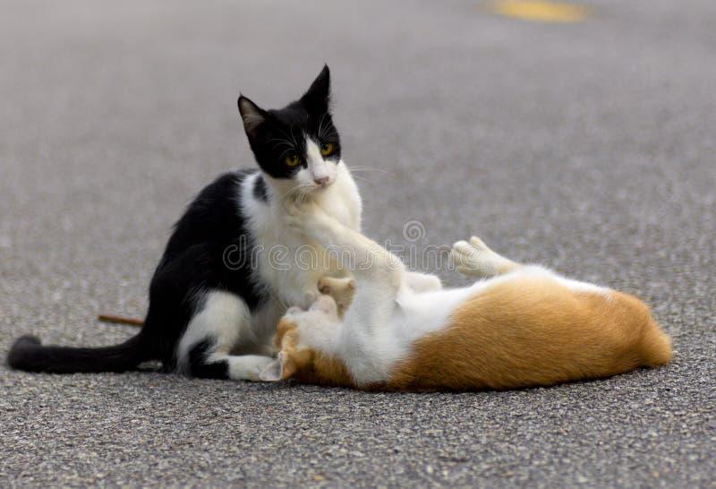 Katter som retar med de royaltyfria foton