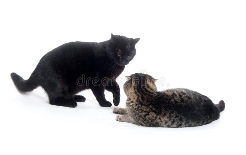 katter som slåss leka två royaltyfria bilder