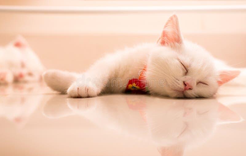 Katter som sover på det gulliga vita golvet, behandla som ett barn djuret fotografering för bildbyråer