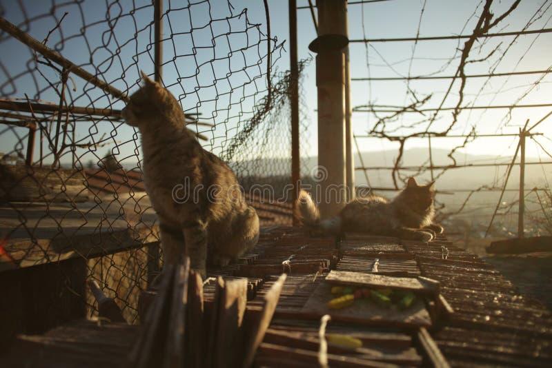Katter som värma sig i solen arkivbild