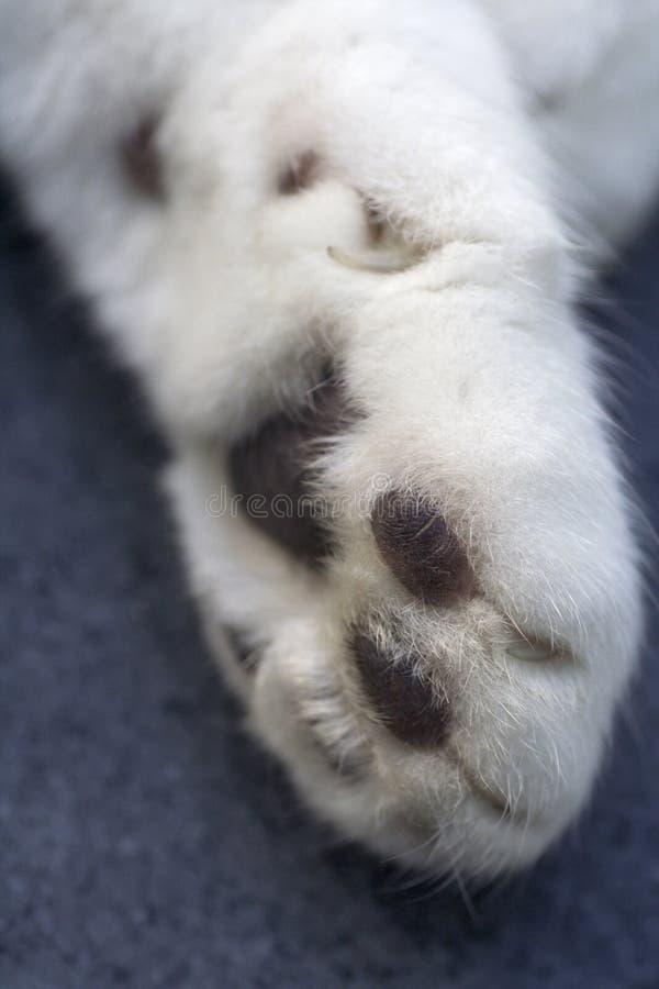 katter tafsar fotografering för bildbyråer