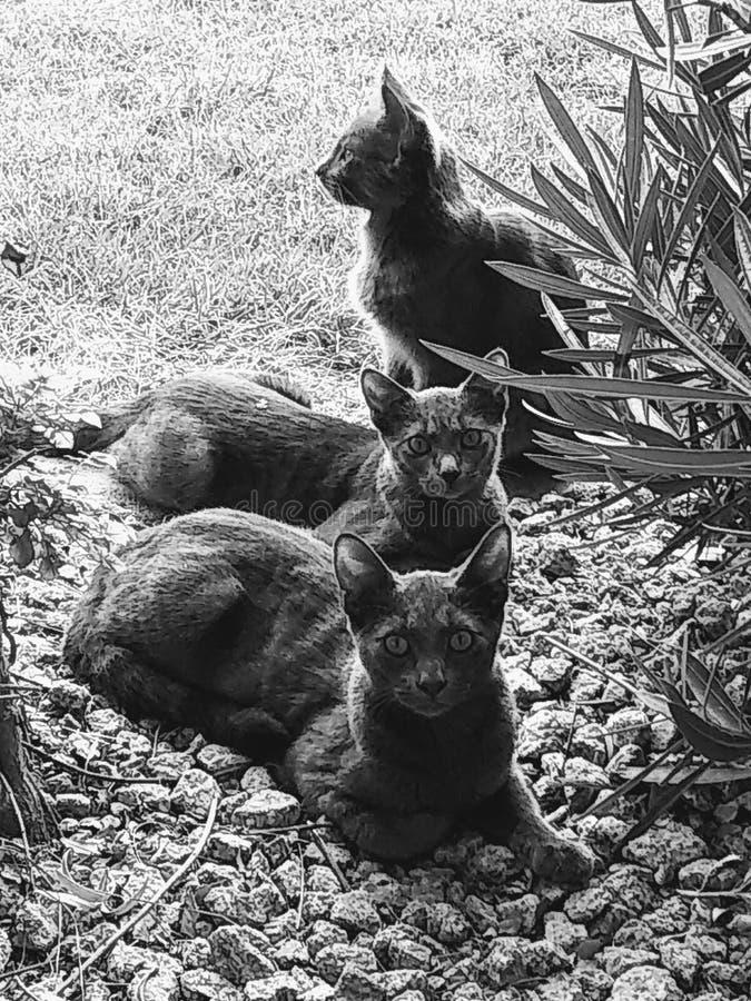 katter tre royaltyfria bilder