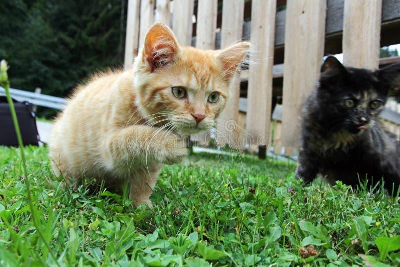 katter två barn arkivbild
