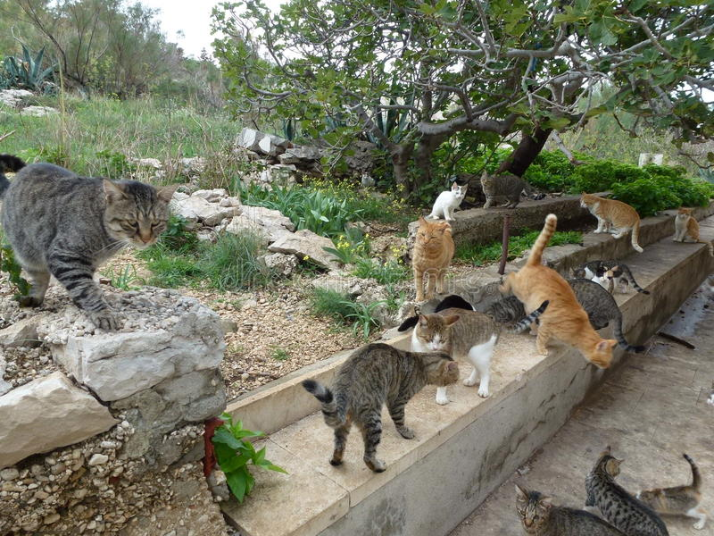 Katter utan hem arkivfoton