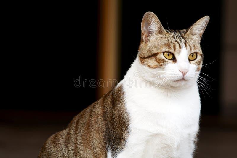 Download Kattfett fotografering för bildbyråer. Bild av hår, pott - 229157