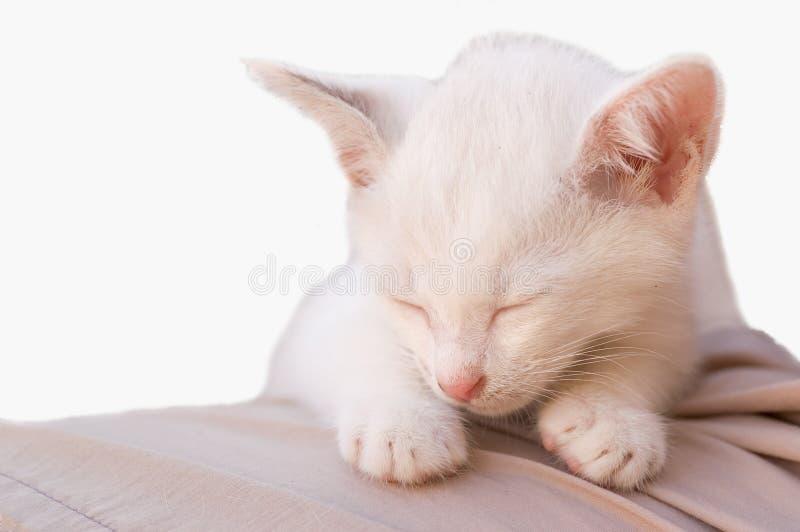 Kattfoto - änglalik sömn 3 royaltyfri fotografi