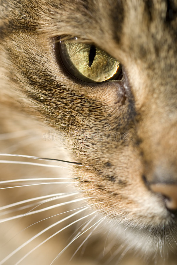 kattframsida arkivfoto