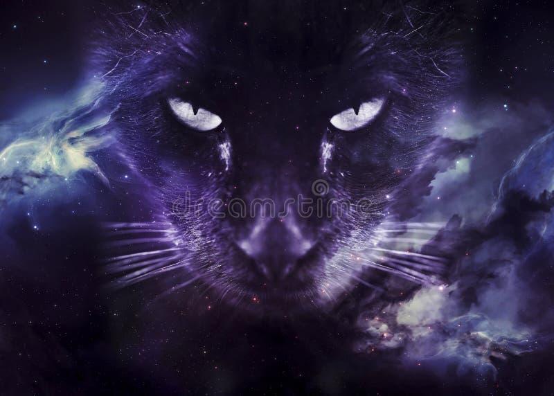 Kattframsida på galaxtapeten royaltyfri bild