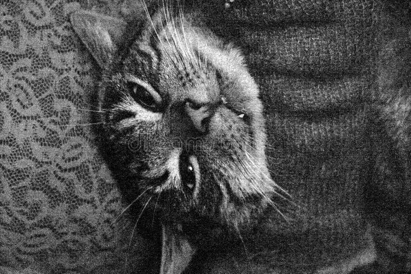 kattframsida s arkivfoton
