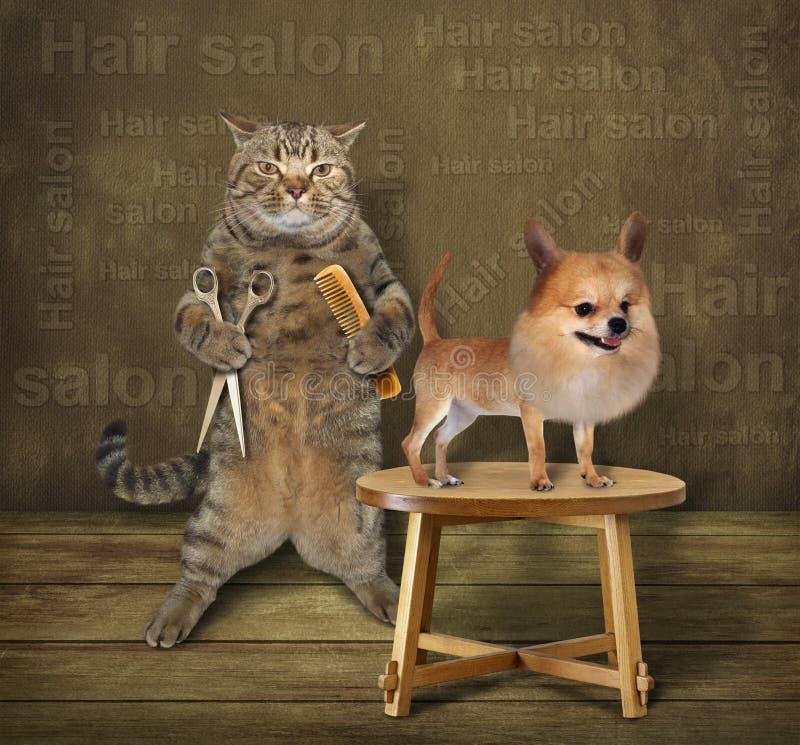 Kattfrisör och hund arkivbild