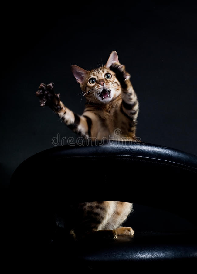 kattgråt arkivbild