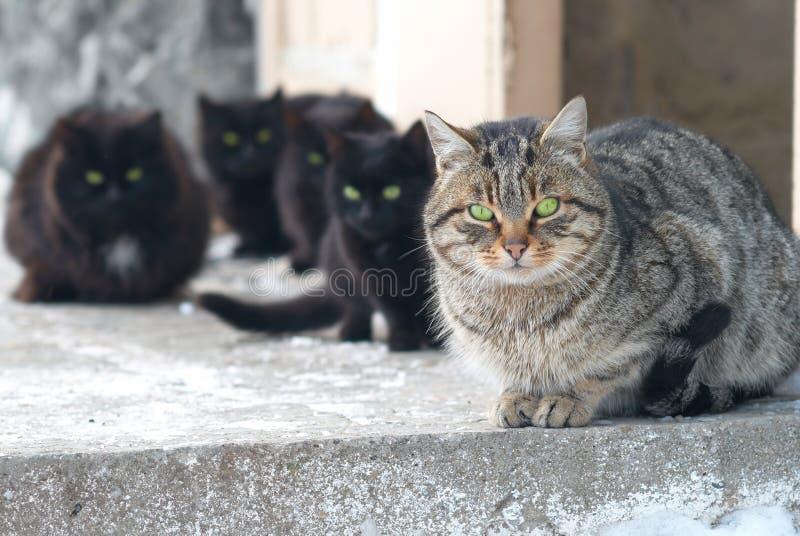 kattgrupp royaltyfri bild