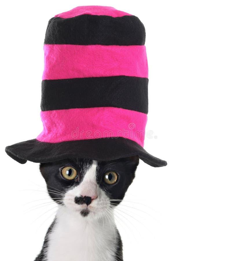katthattslitage fotografering för bildbyråer