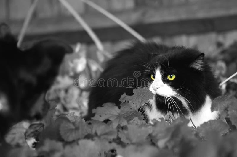 Download Katthund fotografering för bildbyråer. Bild av däggdjur - 278501