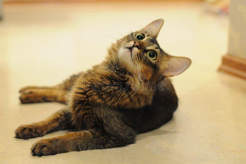 Kattige Eva royalty-vrije stock foto's