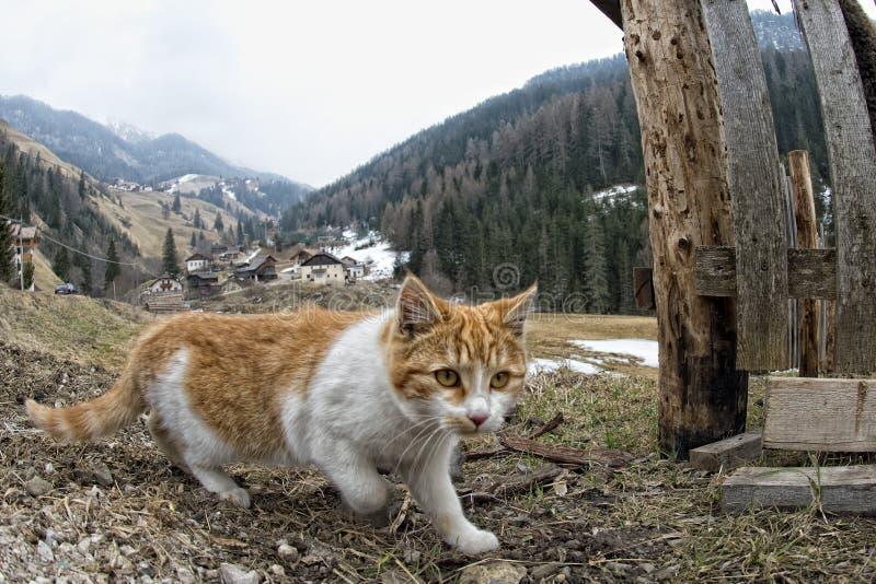 Kattjakt i gräset royaltyfri foto