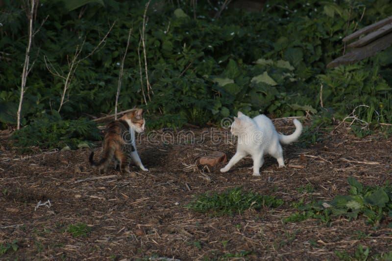 Kattkamp i trädgården av huset royaltyfri bild