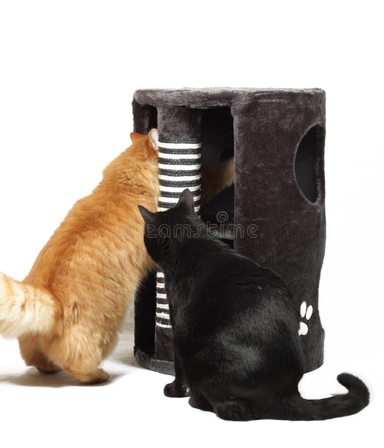 kattkatter som leker scratcher två fotografering för bildbyråer