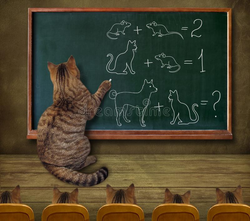 Kattlärare och hans elever arkivbild