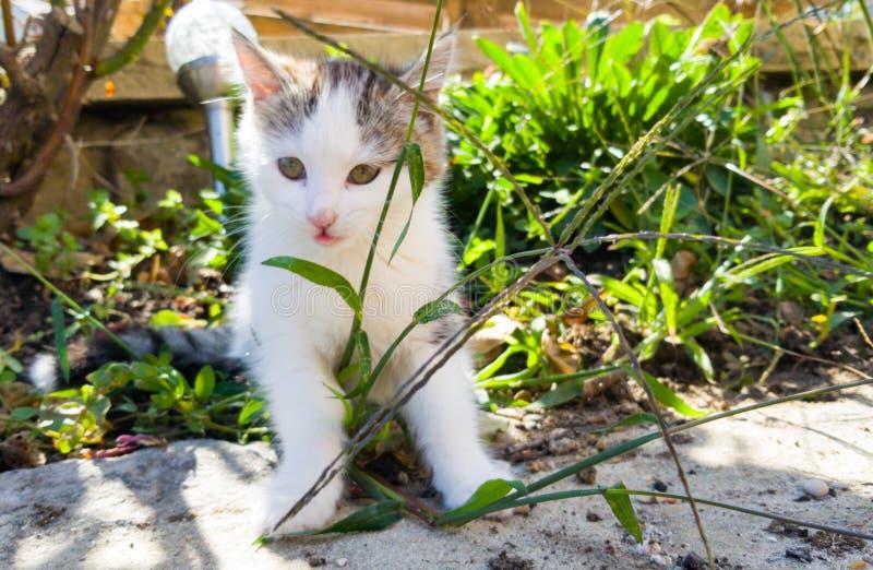 Kattleker i trädgården arkivfoton