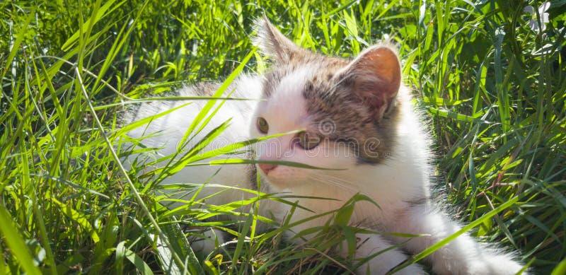 Kattleker i trädgården royaltyfri foto