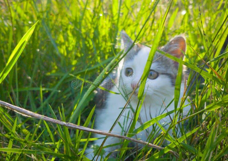 Kattleker i trädgården arkivbilder