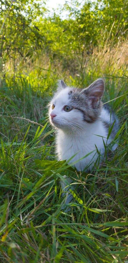 Kattleker i trädgården arkivbild