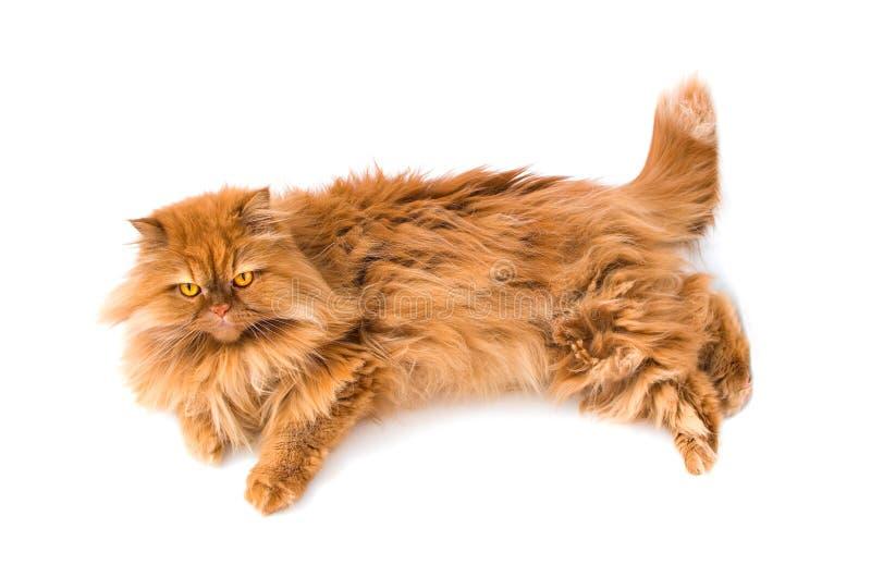 kattperser royaltyfri bild